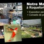 Unique dans les Alpes Maritimes… bassins de jardin ou de baignade